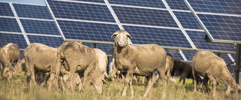 Exploring the solar resurgence